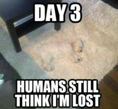 Where is he,Hes been gone for three days! *two seconds later* Ah! The carpet just moved!!!Ohhhhhhhh!Mom I found him!