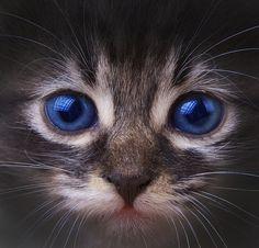 here Kitty Kitty Pretty Cats, Beautiful Cats, Animals Beautiful, Pretty Kitty, Gorgeous Eyes, Amazing Eyes, Animal Gato, Mundo Animal, Crazy Cat Lady