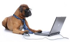 Customer Care Contact Info for PupRwear Dog Boutique Make Money Blogging, Way To Make Money, Earn Money, How To Make, Boxer Love, Dog Boutique, Secrets Revealed, Pet Sitting, Affiliate Marketing