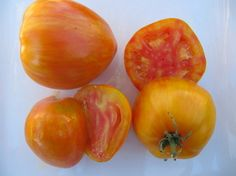 Bleeding Heart Tomto 4-6 oz. mid-season indeterminate. Beautiful red / yellow bi-colored heart shaped tomatoes with stripes.  This tomato is sweet anf fruity with a good balance of juice and flesh.  Good producer.