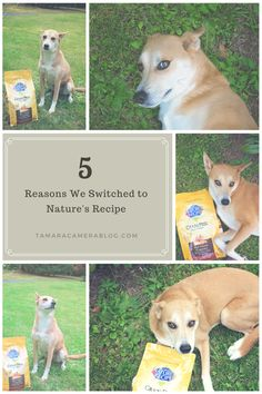 5 Reasons We Switched to Nature's Recipe