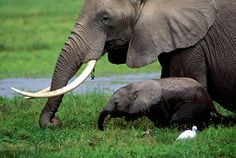 Elephant mom and her baby