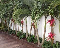 Bromélia: +62 Lindas Ideias de Decoração com a Planta Tropical