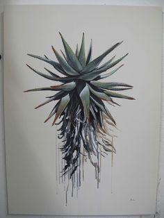 Aloes - Kurt Pio Plant Painting, Ceramic Painting, Art Floral, Aloe Vera Tattoo, Flor Tattoo, Cactus Drawing, Mosaic Flowers, Botanical Drawings, Watercolor Sketch