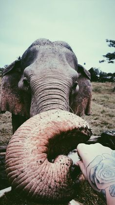 Elephant, Animals, Animales, Animaux, Elephants, Animal Memes, Animal, Animais, Dieren
