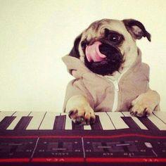 pug. keyboard.