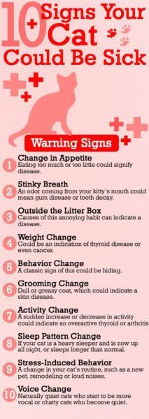 10-signs-your-cat-could-be-sick