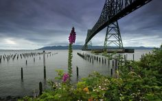 Astoria–megler Bridge Bridges Full HD Foxy Wallpaper Free HD ...