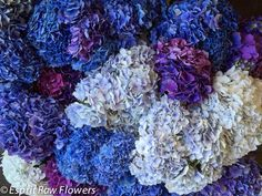 Hydrangea Holland asst. Lavender Flowers, Cut Flowers, Hydrangea, Holland, Purple, Blue, Trees, Seasons, The Nederlands