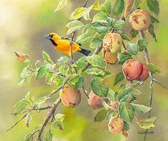 Oriole & Apples  Original Painting by Susan Bourdet