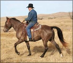 For Sale - EXCESS LOOSE CHANGE TWHBEA #20707667 (FANTASY'S LIMITED EDITION x COIN'S EASY PUSH) 15.1 hand, classic Champagne  Tennessee Walking Horse mare. She has a nice gait under saddle which will only get better with miles. She is very sweet and truly a horse of a different color! She can be bred to any of our 3 stallions. Foaled 05/08/2007. Priced at $3500 US. VIDEO Horse is located in Montana. Overseas transport can be arranged.   http://www.walkerswest.com/Stalls/ExcessLooseChange.htm