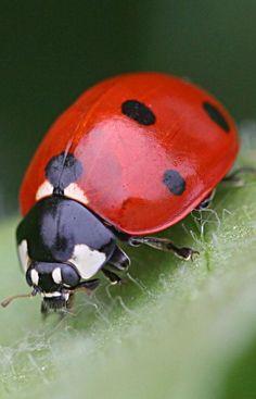 It's a beautiful world! Great image of a lady bugs face. Beautiful Bugs, Beautiful Butterflies, Amazing Nature, Beautiful World, Beautiful Pictures, Beautiful Creatures, Animals Beautiful, Animals And Pets, Cute Animals