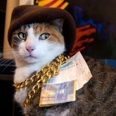 """Gator's bitches better be using jimmies!"" -Allen, The Other Guys  #catsofinstagram #petsofinstagram #cats #pimp #pimpcat #cashmoney #catpimp #thug #thugcat #catthug #thuglife #catthuglife #theotherguys #willferrell #allengamble #favoritemovie"