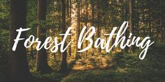 Forest bathing (shinrin-yoku)
