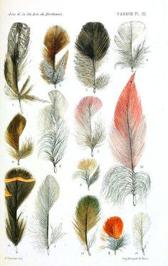 Aves. Pássaros. Tipos de penas. Desenho. Arte.
