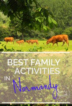 Best Family Activities in Normandy - Oliver's Travels