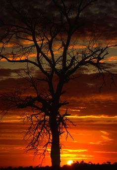 Photograph African Sunset by Rudi Hulshof on 500px