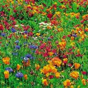 How to Grow a Wildflower Meadow - great read to get ready to plan this spring.
