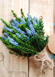Купить Букет из живых цветов Мускари - букет из живых цветов, букет из цветов, букет из роз