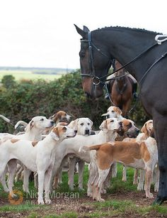 Paul Larby, Huntsman - The Grove & Rufford Hounds