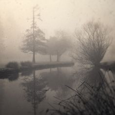 Tamo Fog Series, Bellevue,WA.