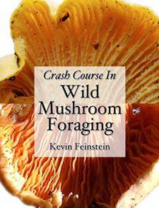 Crash Course in Wild Mushroom Foraging