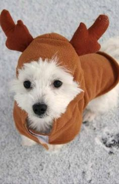 Diy dog christmas costume cats ideas for 2019 Dog Christmas Pictures, Dog Christmas Clothes, Merry Christmas Dog, Christmas Costumes, Christmas Animals, Xmas, Cute Baby Puppies, Cute Dogs, Cute Dog Costumes