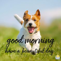 Looking for for ideas for good morning motivation?Check out the post right here for perfect good morning motivation inspiration. These amuzing pictures will make you happy. Good Morning Dog, Good Morning Thursday, Good Morning Quotes For Him, Happy Morning, Morning Wish, Good Morning Images Flowers, Good Night Beautiful, Good Morning Motivation, Good Night Greetings