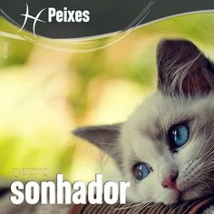 """""""#Peixes #signos #zodíaco ♓"""""""