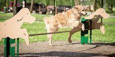 Rover Jump Over | Dog Park Amenities | Bark Park