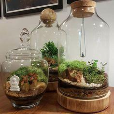awesome 48 Simplicities Meets Complexities Terrarium Plants https://wartaku.net/2017/06/08/48-simplicities-meets-complexities-terrarium-plants/