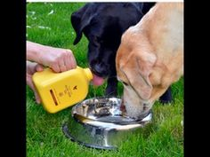 Aloe Vera Gel benefits for animals! Does wonders for dogs! http://patricia.flp.com/home/