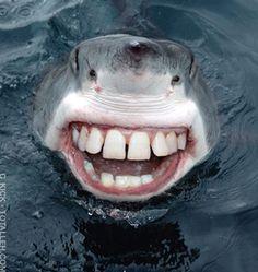 requin - Recherche Google
