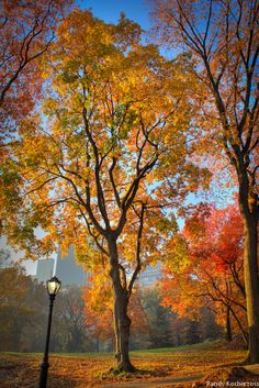 Central Park Series II by ~digitalabstract on deviantART