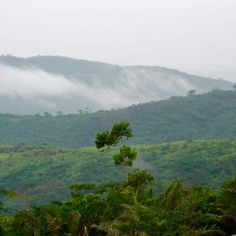 The view outside my house in Oyarifa Ghana. Song birds each morning the fog from Aburi coming down the hills and tranquil silence. www.kokude.shop (link in bio) #womensfashion #mensfashion #waxprint #highfashionmen #highfashionblackmen #dtla #ankarastyles #checkoutafrica #thursday #ghana #africa #africaisbeautiful