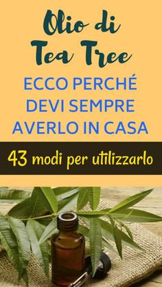Olio di Tea Tree: ecco perché devi sempre averlo in casa. 43 modi per utilizzarlo - NewsItalia Tee Tree Oil, Tea Tree Essential Oil, Melaleuca, Green Life, Beauty Care, Good To Know, Health And Beauty, Healthy Life, Natural Remedies