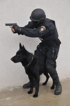 I love police dogs Military Working Dogs, Military Dogs, Police Dogs, Military Police, Service Dog Training, Service Dogs, Dog Soldiers, War Dogs, German Shepherd Dogs