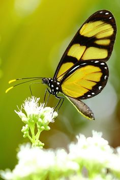 So Pretty Butterfly!!!!!!