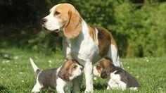 Come prevenire danni e comportamenti distruttivi nel cucciolo