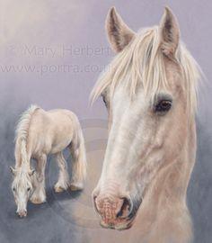 palomino gypsy cob horse portrait by Mary Herbert