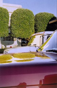 William Eggleston  UNTITLED (TOPIARY TREES, HOLLYWOOD), 1999 - 2000  Iris print  30 x 24 inches  76.2 x 61 centimeters