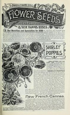 The new guide to rose culture : 1890