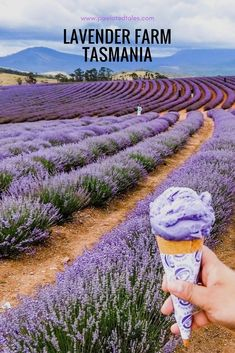 Tasmania Road Trip - Lavender Fields and Bay of Fires #AustraliaTravelPhotography