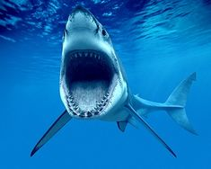 Ocean Habitats.  Animal World.  Science, Grades k-3.  Common Core Aligned Lesson Plan.  Wonderville.  Free.