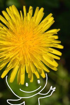 Dandelion of yellow Afro-hair     #love #peace #smile #aloha #art #child #dandelion