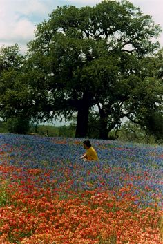 Lady Bird Johnson among Texas wildflowers, 4/9/1968. LBJ Presidential Library photo C9479-17; image is in the public domain.