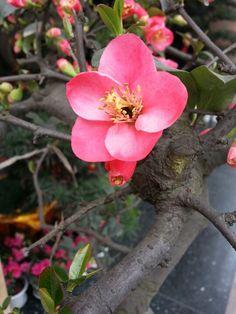 Springtime in Sichuan