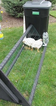 Chicken Coop Tour!  TRASH CAN chicken TRACTOR?? You Betcha!! other two pics on board or see site !! OUT OF THE BOX!! ♥