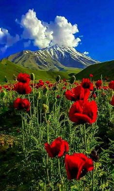 Pretty clouds adding to the beauty of the scenery. Beautiful Nature Pictures, Beautiful Nature Scenes, Amazing Nature, Beautiful Landscape Wallpaper, Beautiful Landscapes, Landscape Photography, Nature Photography, Beautiful Rose Flowers, Scenery