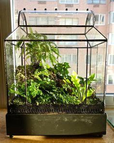 fensterbank deko in einer laterne ein terrarium gestalten miniatur garten terrarium. Black Bedroom Furniture Sets. Home Design Ideas